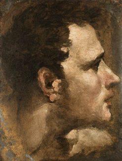 Head of a Youth | Domenico Beccafumi | Oil Painting