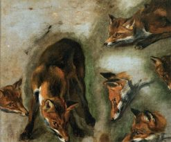 Studies of a Fox   Pieter Boel   Oil Painting