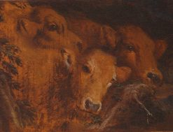 Study for the Heads of Cattle | Giovanni Castiglione | Oil Painting