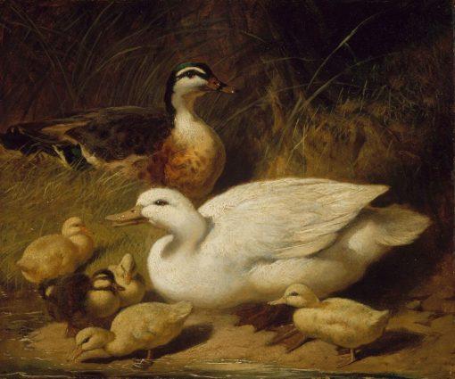 Ducks and Ducklings   John Frederick Herring