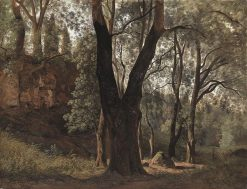 Forest Interior | Johann Martin von Rohden | Oil Painting