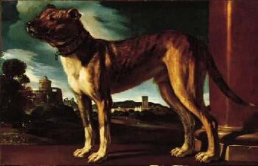 Aldrovandi Dog | Guercino | Oil Painting