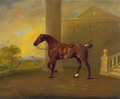 Roan Hack | Benjamin Marshall | Oil Painting