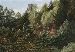 Woodland near Dresden | Carl Gustav Carus | Oil Painting