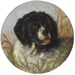 Head of a Landseer Newfoundland | George Earle | Oil Painting
