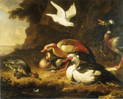 Ducks | Melchior d'Hondecoeter | Oil Painting