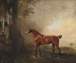 Tiger | Benjamin Marshall | Oil Painting