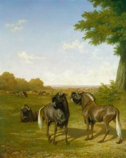 White-tailed gnus | Jacques Laurent Agasse | Oil Painting