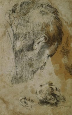 Two Studies of the Head of a Bearded Man | Jacopo Bassano | Oil Painting