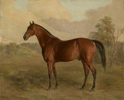 Kentucky Woodpecker | Edward Troye | Oil Painting