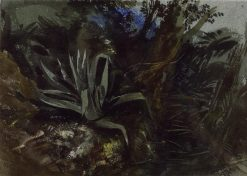 Study of an Aloe | William James Muller | Oil Painting