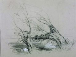 Study of Willows | William James Muller | Oil Painting