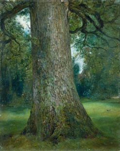Study of the Trunk of an Elm Tree | John Constable | Oil Painting