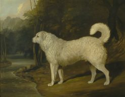 A Dog Called Ross   David Dalby   Oil Painting