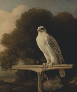 Greenland Falcon | George Stubbs | Oil Painting