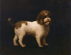 Water Spaniel | George Stubbs | Oil Painting