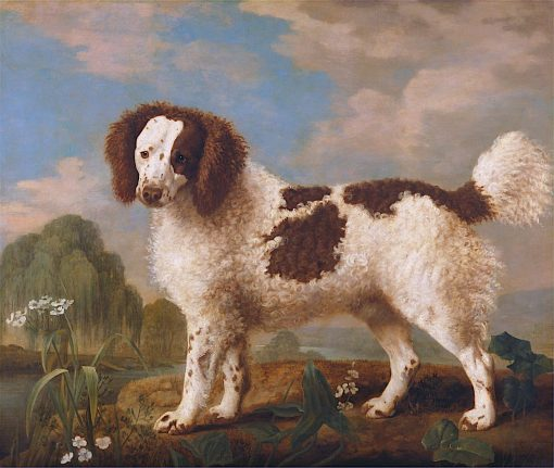 Brown and White Norfolk or Water Spaniel | George Stubbs | Oil Painting