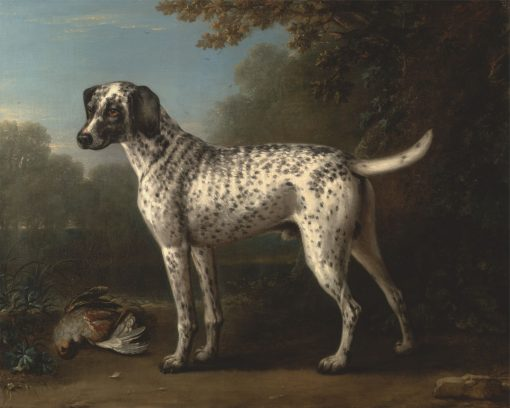 A Grey Spotted Hound | John Wootton | Oil Painting