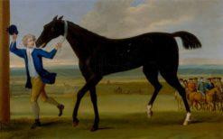 The Duke of Rutland's Bonny Black | John Wootton | Oil Painting