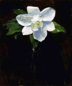 Magnolia | Charles Walter Stetson | Oil Painting