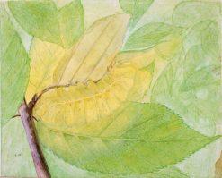 Lunar Caterpillar   Abbott Handerson Thayer   Oil Painting