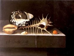 Shells | Adriaen Coorte | Oil Painting