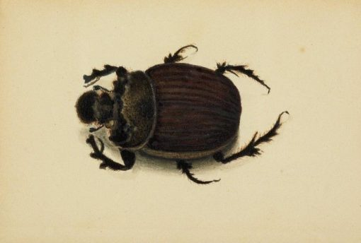 African Beetle | Albert Bierstadt | Oil Painting