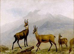 Chamois | Albert Bierstadt | Oil Painting