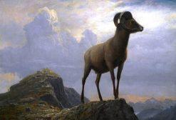 Bighorn Ram | Albert Bierstadt | Oil Painting