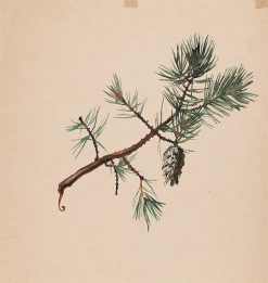 A Pine Branch | Albert Edelfelt | Oil Painting