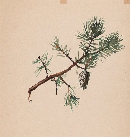 A Pine Branch | Albert Edelfelt | Oil Painting