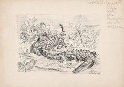 Africké zvieratá | Arnold Peter Weisz-Kubín?an | Oil Painting