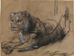 Young Lion Resting | Rembrandt van Rijn | Oil Painting