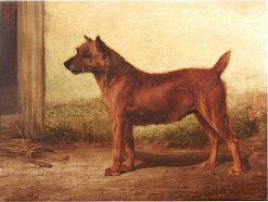 Irish Terrier   William Henry Hamilton Trood   Oil Painting