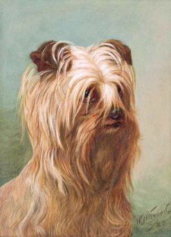 A Yorkshire Terrier | William Henry Hamilton Trood | Oil Painting