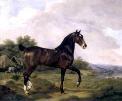 A Dark Bay Hunter in an Extensive Landscape
