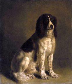 A Springer Spaniel | Jacques-Laurent Agasse | Oil Painting