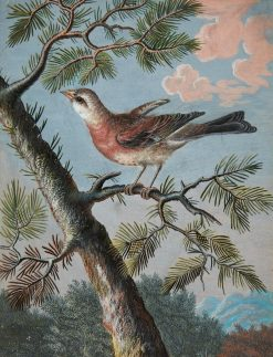 Songbird in an Evergreen | Christoph Ludwig Agricola | Oil Painting