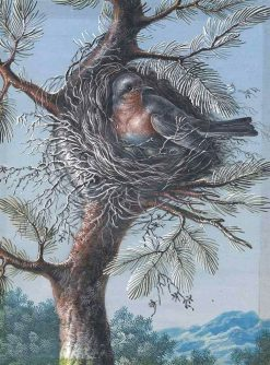 A Red-Breasted Bird Nesting in a Fir Tree | Christoph Ludwig Agricola | Oil Painting
