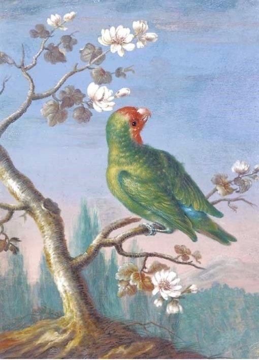 A Red Fronted Parakeet | Christoph Ludwig Agricola | Oil Painting