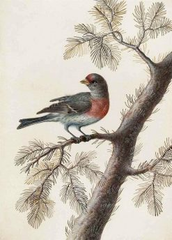 A Bird on a Pine Branch | Christoph Ludwig Agricola | Oil Painting