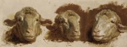 Study of Three Sheep Heads | Auguste Bonheur | Oil Painting