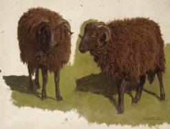 Study of Black Rams | Auguste Bonheur | Oil Painting