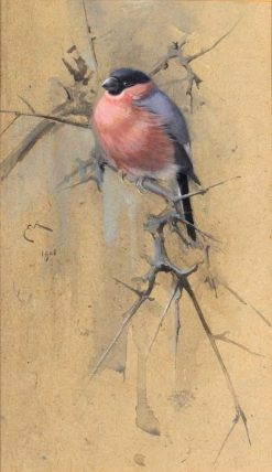 Bullfinch on Twigs | Edwin John Alexander | Oil Painting