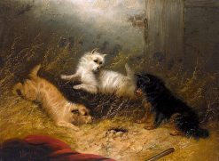 Three Terriers Guarding a Hole | Edward Armfield | Oil Painting