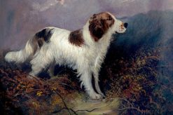 Springer Spaniel | Edward Armfield | Oil Painting
