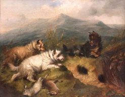 Terriers Rabbiting in a Highland Landscape | Edward Armfield | Oil Painting