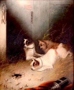 Three Terriers Ratting in a Barn | Edward Armfield | Oil Painting