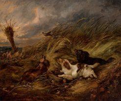 Spaniels Flushing Pheasants | George Armfield | Oil Painting