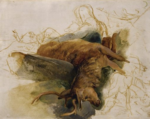 A Dead Stag